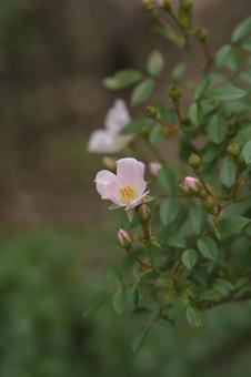 nozomi2011525-3.jpg
