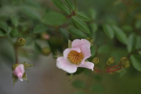 nozomi2011525-4.jpg
