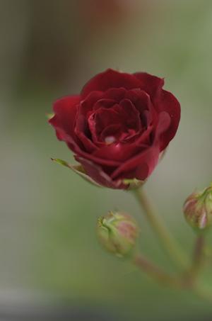 redcascade2011526-1.jpg