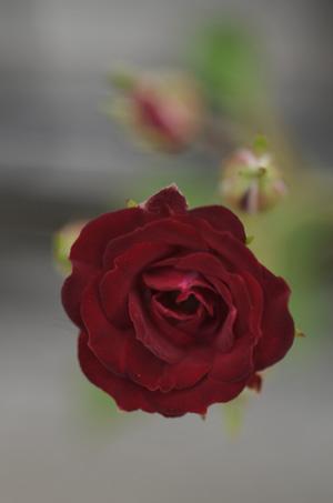 redcascade2011526-2.jpg
