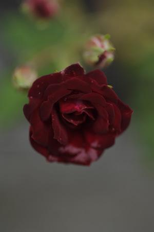 redcascade2011527-1.jpg