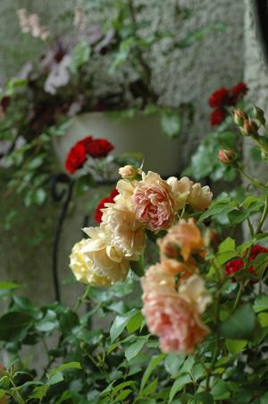 roses2011528-2.jpg