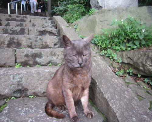 代々木八幡宮の猫