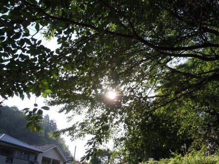 木漏れ日(2011-05-14)