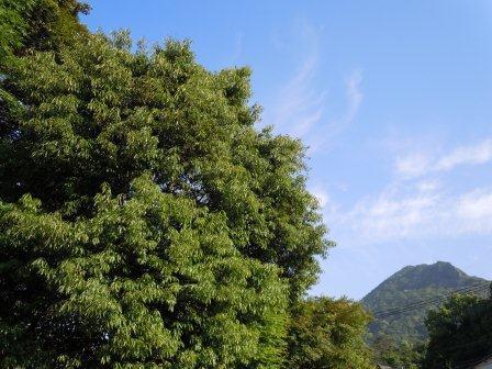五月晴れ1(2011-05-14)