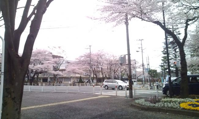 20110409_さくら-001