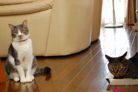 20110930kotetsumiikun.jpg