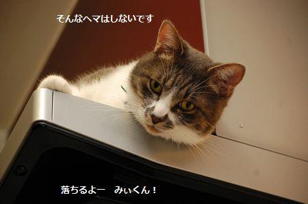 20111018miikun2.jpg