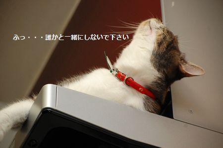 20111018miikun3.jpg