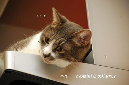 20111018miikun4.jpg