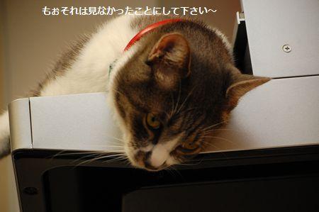 20111018miikun5.jpg