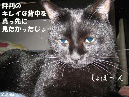 背中美猫?