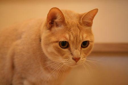 階段にいるオーリィ1