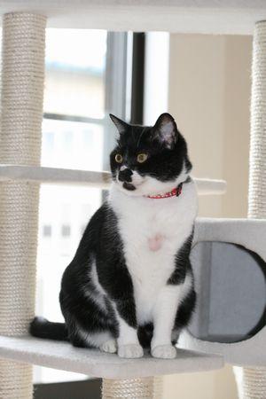 キャンチャマの猫タワー2