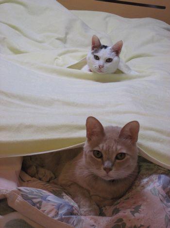 チビィとオーリィも微妙な距離感でお留守番