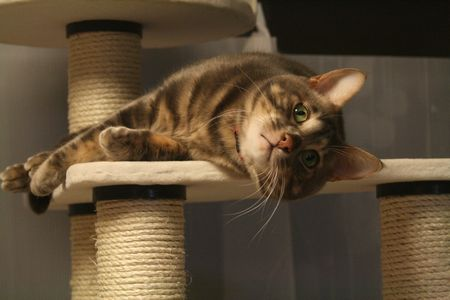上に行きたいよ