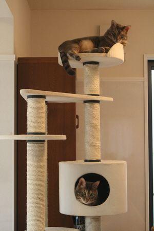 一階の猫タワー