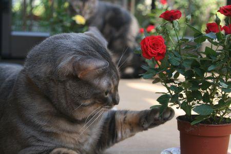 バラをチョイチョイ