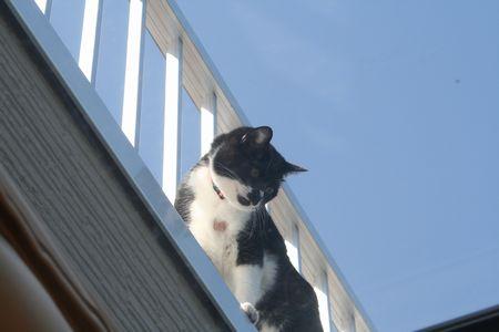 上からならティラなんて怖くないもん