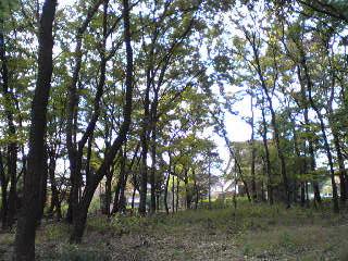光注ぐ雑木林