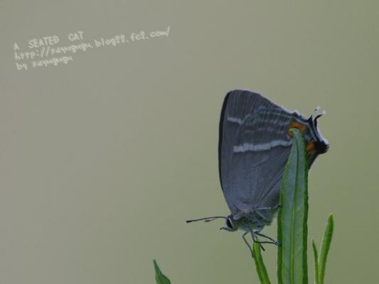 IMGP7150t-3.jpg