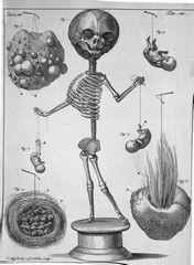 Thesaurus anatomicus