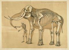 ヒトと動物の骨格