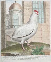 Francois Nicolas Martinet