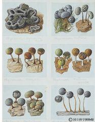 那須御用邸の菌類図譜