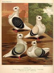 The illustrated book of pigeons