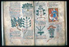 医学と薬草の写本