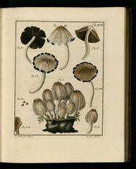 Fungorum qui in Bavaria et Palatinatu