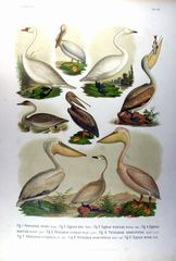 Evropske ptactva