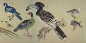 薩摩鳥譜図巻
