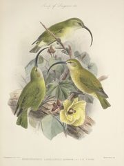 Birds of Laysan