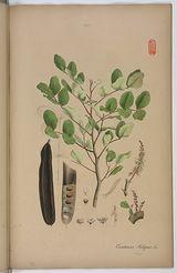 Plantae officinales, oder, Sammlung officineller Pflanzen