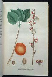 Traite des arbrisseaux et des arbustes cultives en France et en pleine