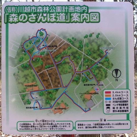 2011-01-05 森のさんぽ道 (1)