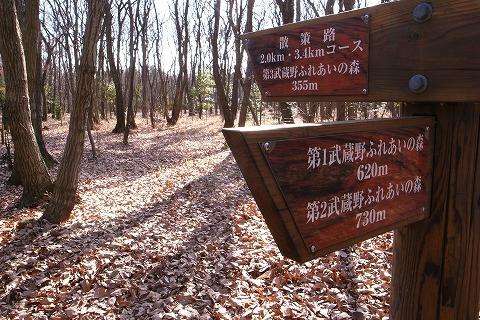 2011-01-05 森のさんぽ道 (6)
