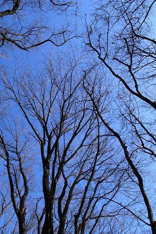 2011-01-05 森のさんぽ道 (7)