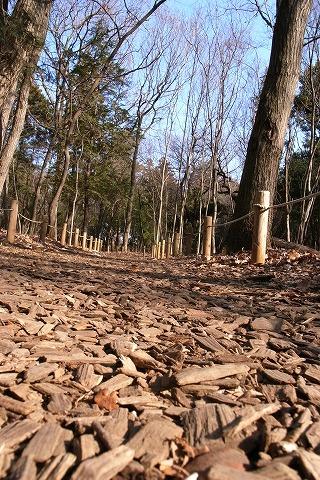 2011-01-05 森のさんぽ道 (50)