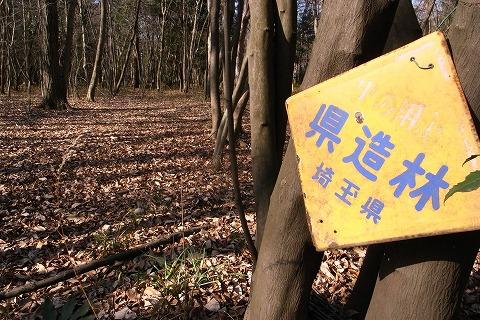 2011-01-05 森のさんぽ道 (48)