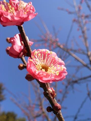 2011-01-19 寄居~東秩父~川越 101