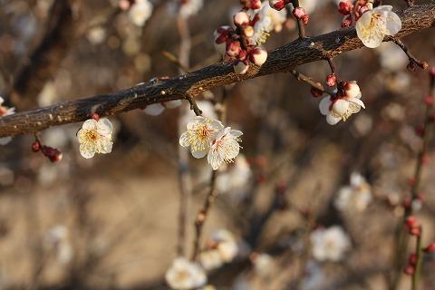 2011-02-08 川越スナップ 042