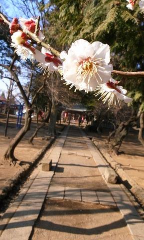 2011-02-09 蔵里 030