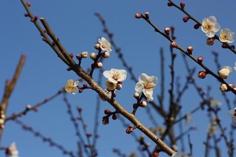 2011-02-08 川越スナップ 045