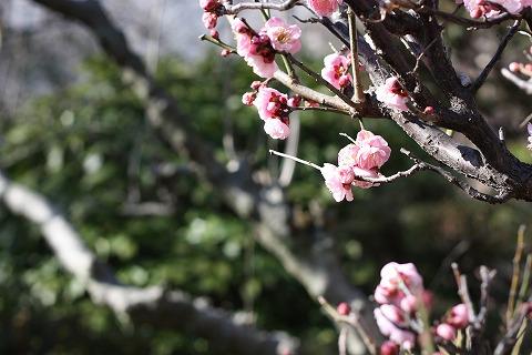 2011-03-03 荒川CR 003