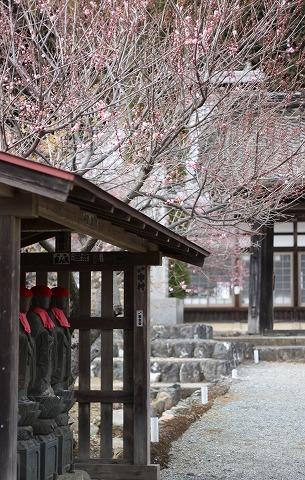 2011-03-03 越生の梅 036