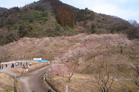 2011-03-09 裏高尾の梅 044