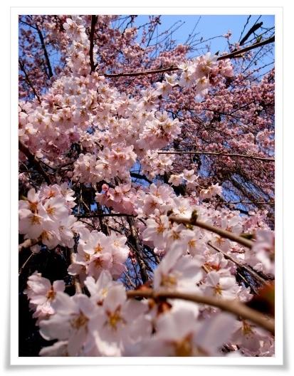 2011-03-30 明見院 009